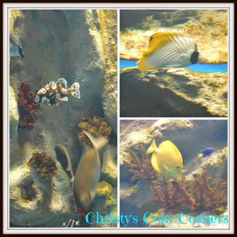 The Greater Cleveland Aquarium