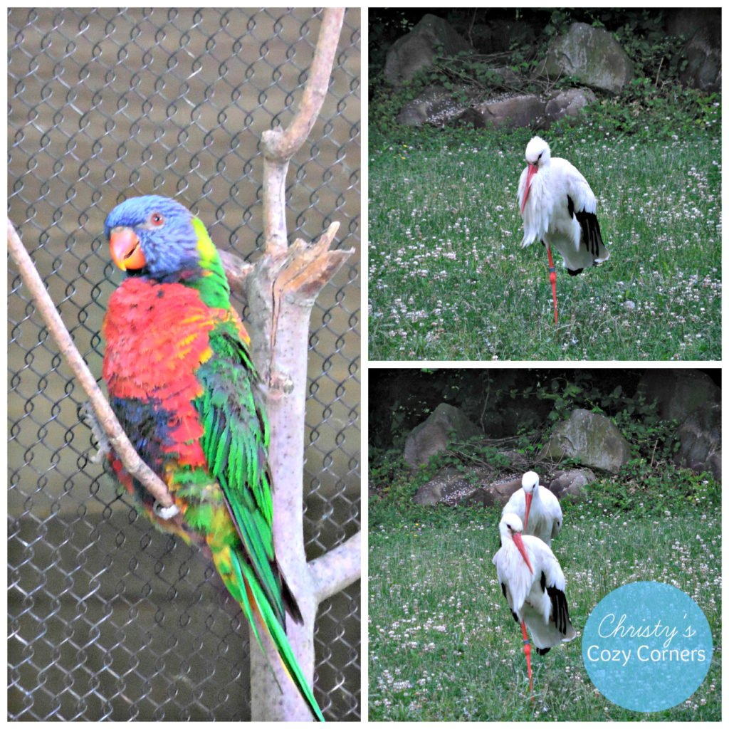Cleveland_Zoo_Birds