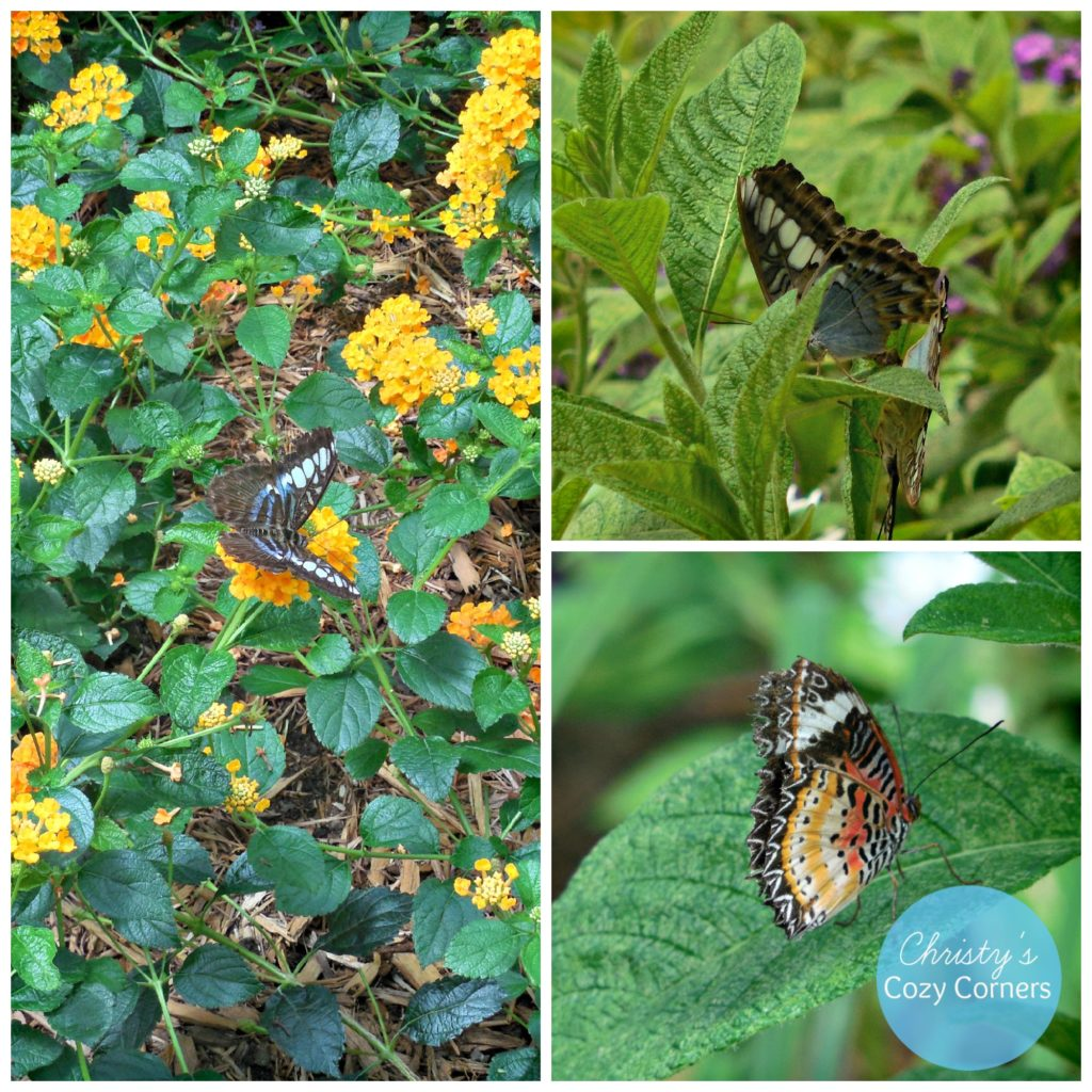 Butterfly House 2