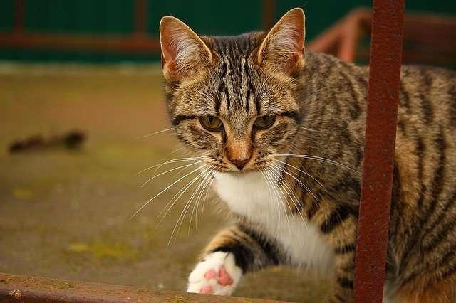 cat-1094345_640