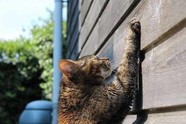 cat-750259_640
