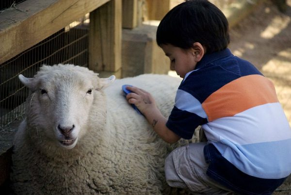 Enhance your child's learning by visiting a zoo.