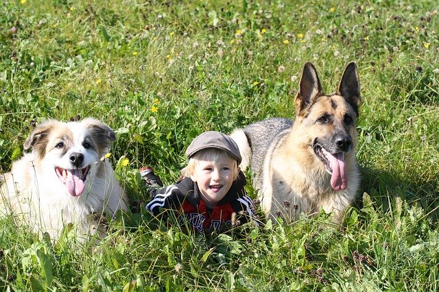 Does Your Child Love Animals? Tips To Find The Right Pet For Your Family