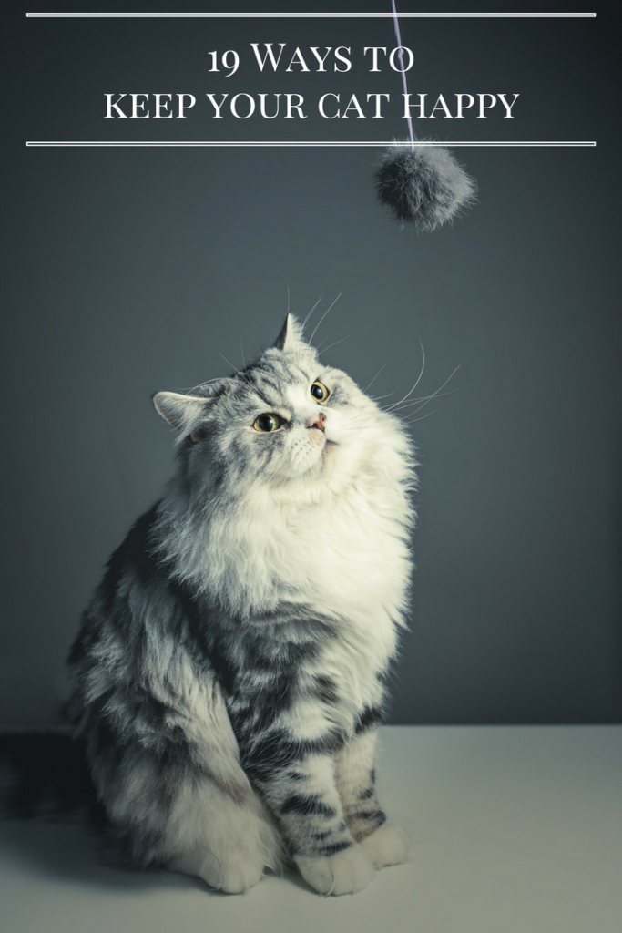 19 Ways to Keep Your Cat Happy