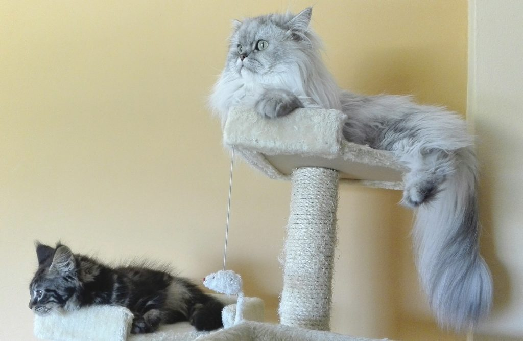 19 Ways to Keep Your Cat Happy and Content