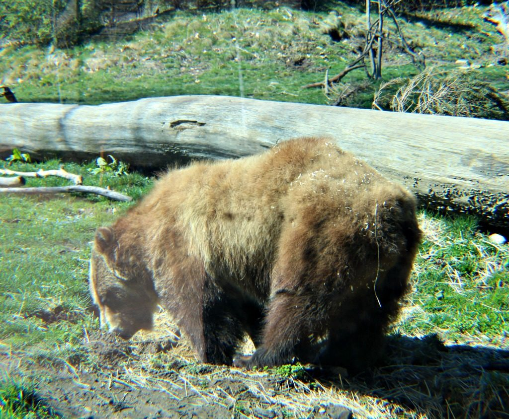 8 Great Reasons to Visit the Akron Zoo
