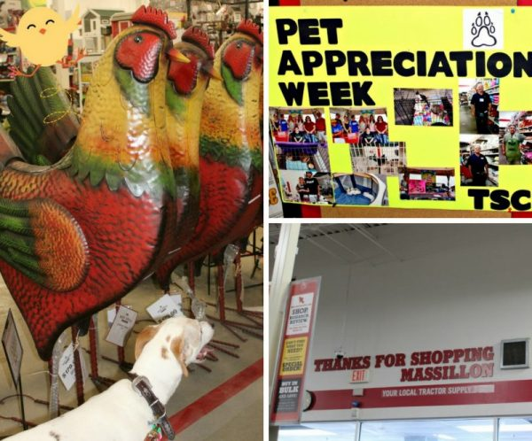 Interior of Tractor Supply Co with Big Metal Roosters and Pet Appreciation Week Sign