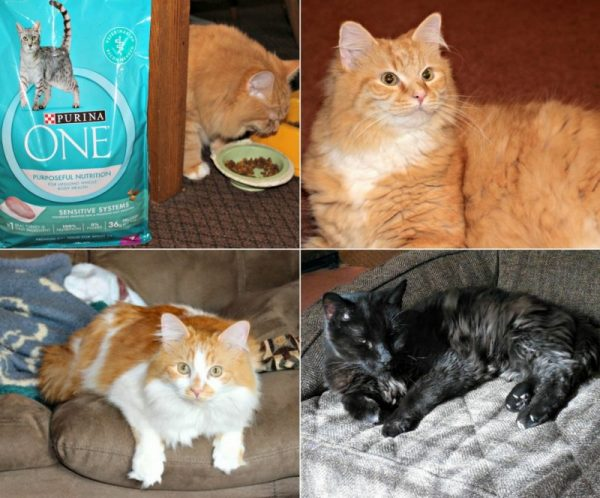 Purina One and Cats