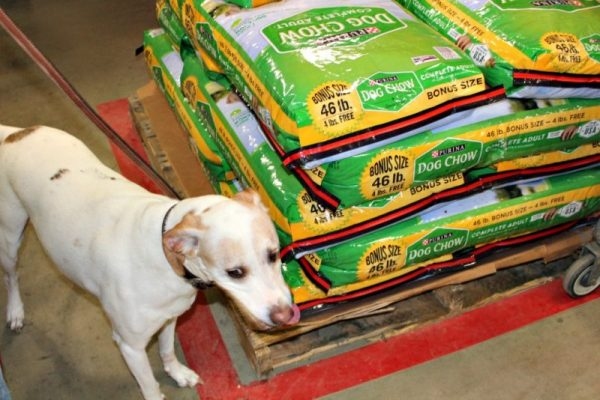 Purina Dog Chow at Tractor Supply