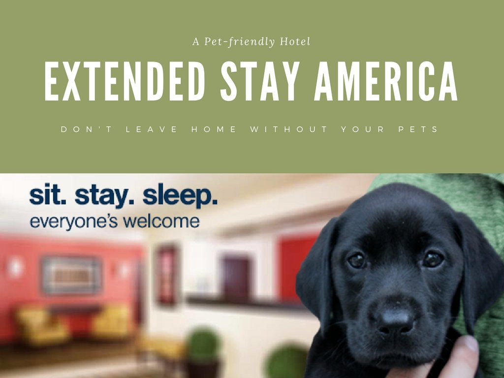 Hotel Stays with Your Pet at Extended Stay America