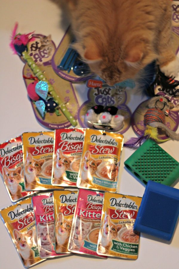 Cat Toys, Treats, and Brushes You and Your Cat Will Love