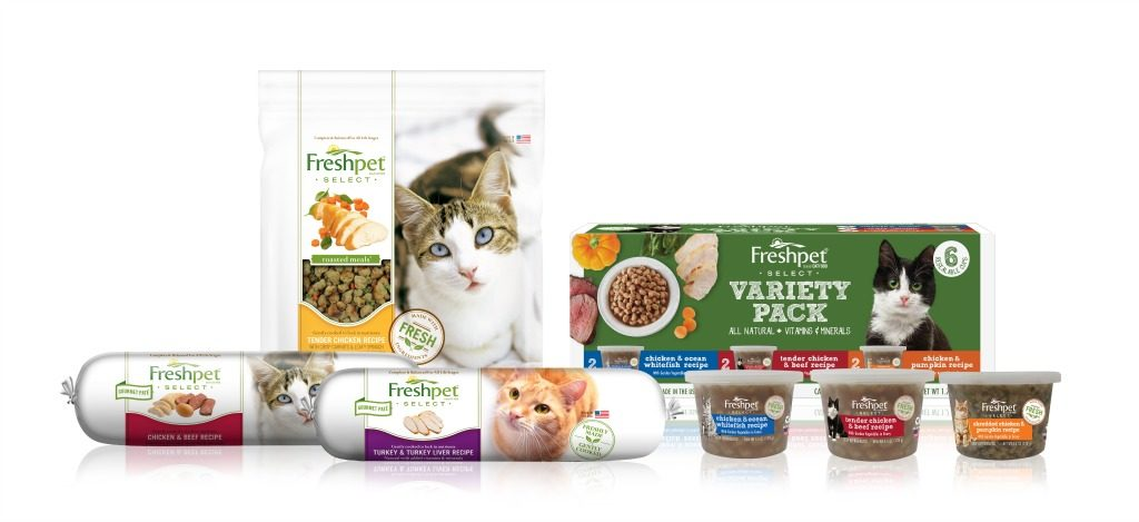 October 29th is Cat Day and Freshpet Has Great News for Cat Shelters