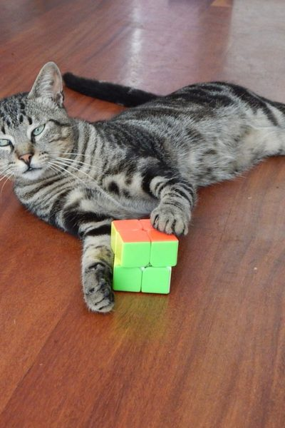 Cool Cat Gadgets You and Your Cat Will Love