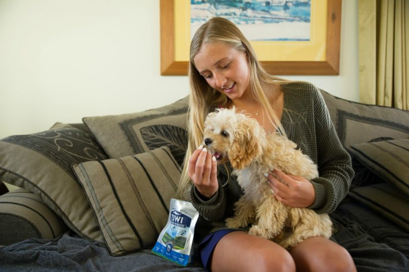 Your pet will love Ziwi treats so be sure to take them when you travel with your pets during the holidays