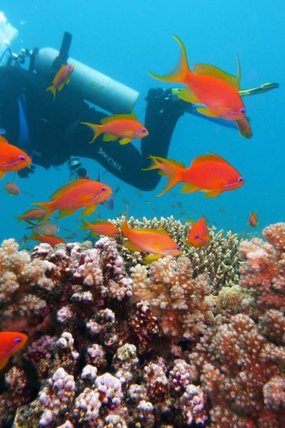 Find the Best Places to Go Scuba Diving