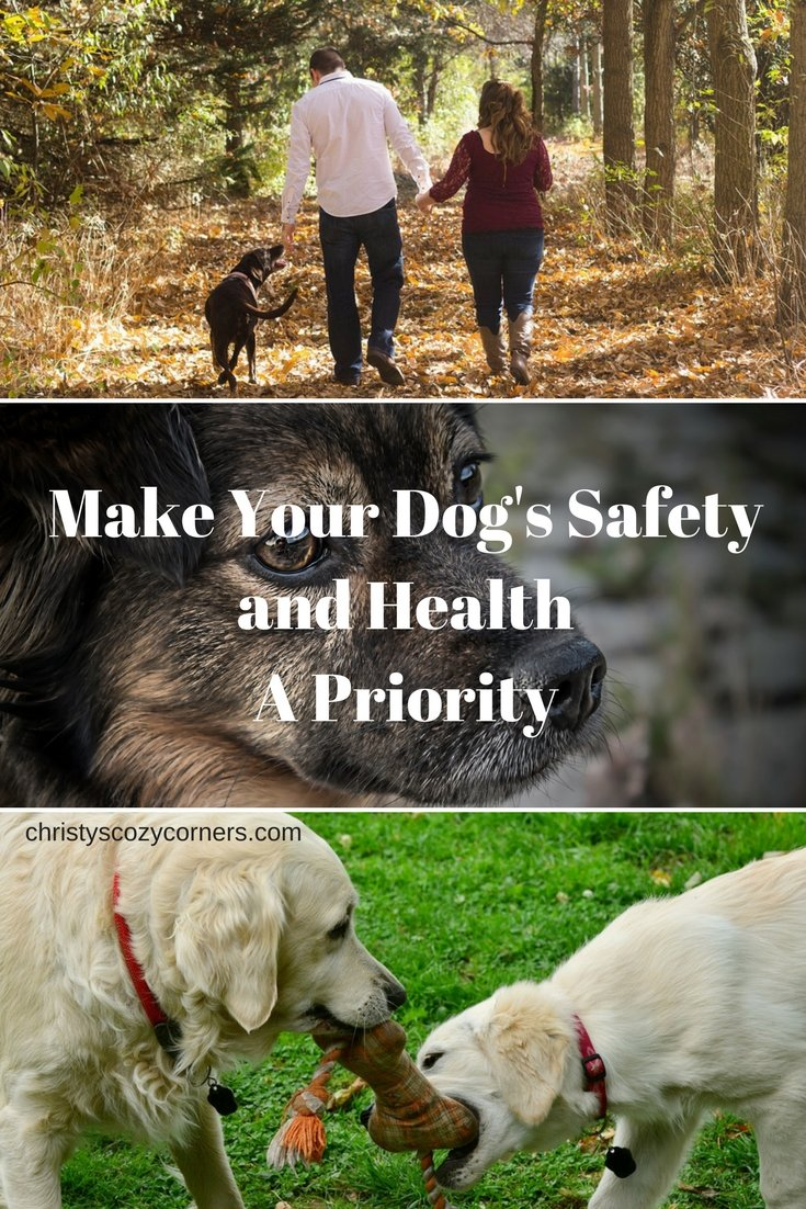Make Your Dog's Safety and Health a Priority