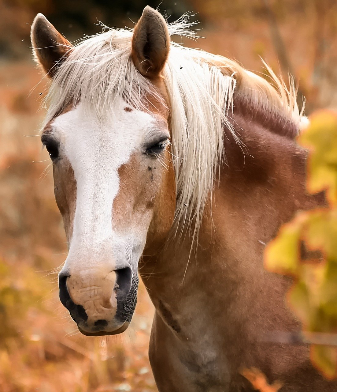 Five Basic Horse Grooming Tools