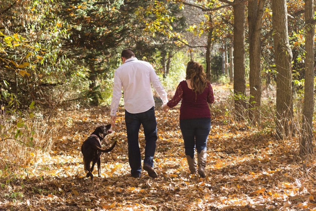 Make Your Dog's Safety and Health a Priority by Walking Your Dog