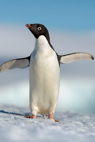Disneynature's PENGUINS Is Coming Earth Day 2019 #DisneynaturePenguins