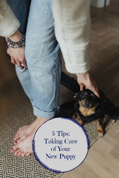 5 Tips for Taking Care of Your New Puppy