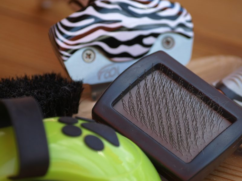 5 Essential Pet Grooming Supplies for Your Dog