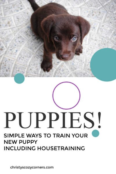 Learn simple tricks to train your new puppy including house training.