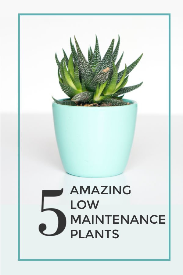 Check out these 5 amazing low maintenance plants