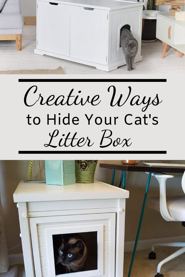 How to Hide Your Cat's Litter Box in Creative Ways