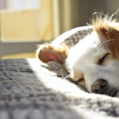Make Sure Your Dog Gets Enough Sleep