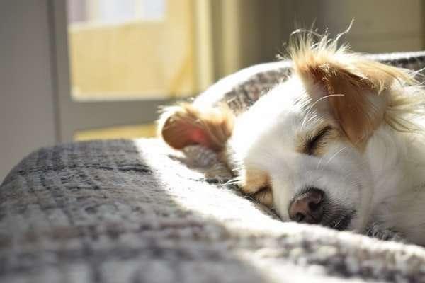 Make Sure Your Dog Gets Enough Rest